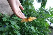 Ferme des papillons
