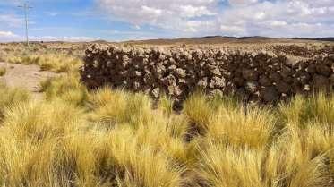 Et dans ce désert, on voit des graminés, des murs de clôture en pierre volcanique