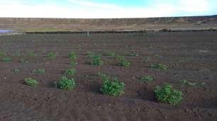 Champs de quinoa cultivés dans le cratère