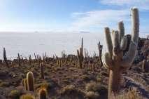 En grimpant un peu sur l'île, nous avons un magnifique panorama sur le salar à 360°