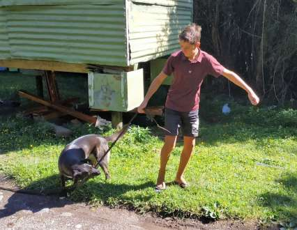 François joue avec Lila, la chienne