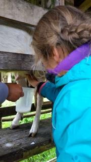 Diane traie les chèvres
