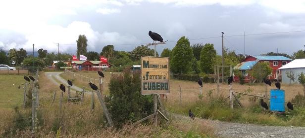 A l'entrée d'un village, nous sommes accueillis par un groupe de vautours noirs... ambiance !