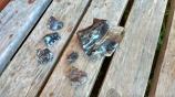 Nous trouvons de beaux morceaux d'obsidienne autour du cratère