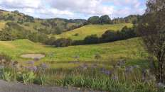 Bon déjà, nous avons eu l'impression de nous retrouver près d'Hobbitbourg des dizaines de fois à travers l'île du Nord. Les paysages sont verts et joliment vallonés