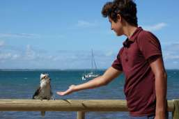 François sympathise avec un Kookaburra. Oiseau amusant dont le cri ressemble à un rire moqueur...