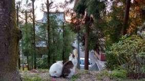 Avez-vous déjà vu un couple de chats tranquillement assis devant un coucher de soleil ? Quand je me suis approchée d'eux, ils se sont à peine retournés...