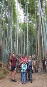 Ici dans une forêt de bambous