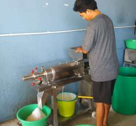 La chair est pressée dans une machine pour en extraire du lait de coco et la poudre