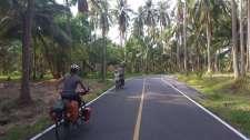 Dans une forêt de cocotiers