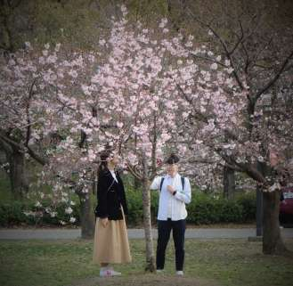 La fleur de cerisier est un symbole important au Japon. Fleur fragile, elle nous rappelle que la beauté est passagère...