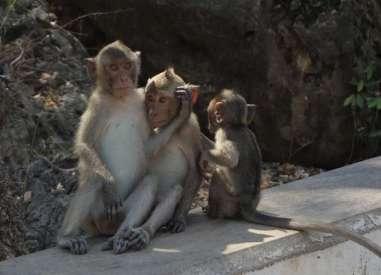 Nous croisons de temps en temps des macaques le long de la route