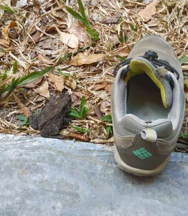 Toujours vérifier dans ses chaussures le matin. Moins dangereux qu'un scorpion mais ça doit faire un bruit répugnant