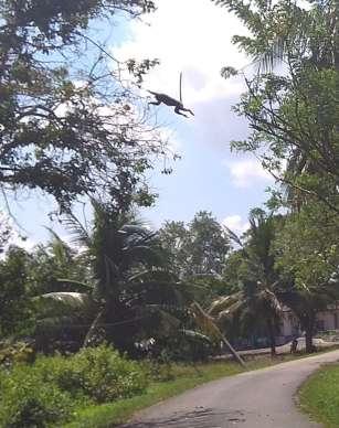 Ce macaque a fait un énorme bond par dessus la route, entre deux arbres, juste devant nos vélos !