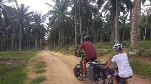 Au milieu des plantations de palmiers...