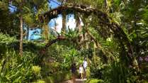 Visite du magnifique jardin botanique...