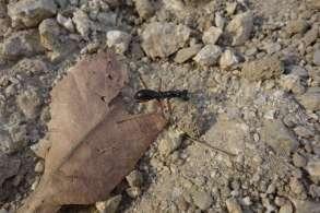 S'il y a un spécialiste, est-ce bien une fourmi ???