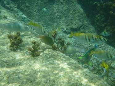 Et tout de suite pleins de poissons tropicaux