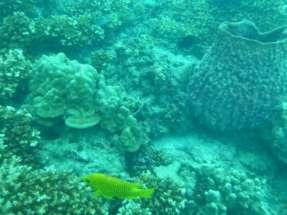 Du corail-amphore