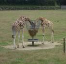 Petit clin d'œil au M de Joséphine. Est-ce que les girafes sont sponsorisées par une célèbre marque alimentaire ?
