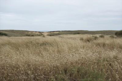 de plaines sableuses,